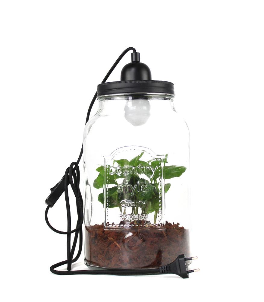 FLOB La pianta del caffè con la lampada per un tocco shabby